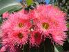 Flowergum_pk
